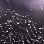 Dew-Soaked Web