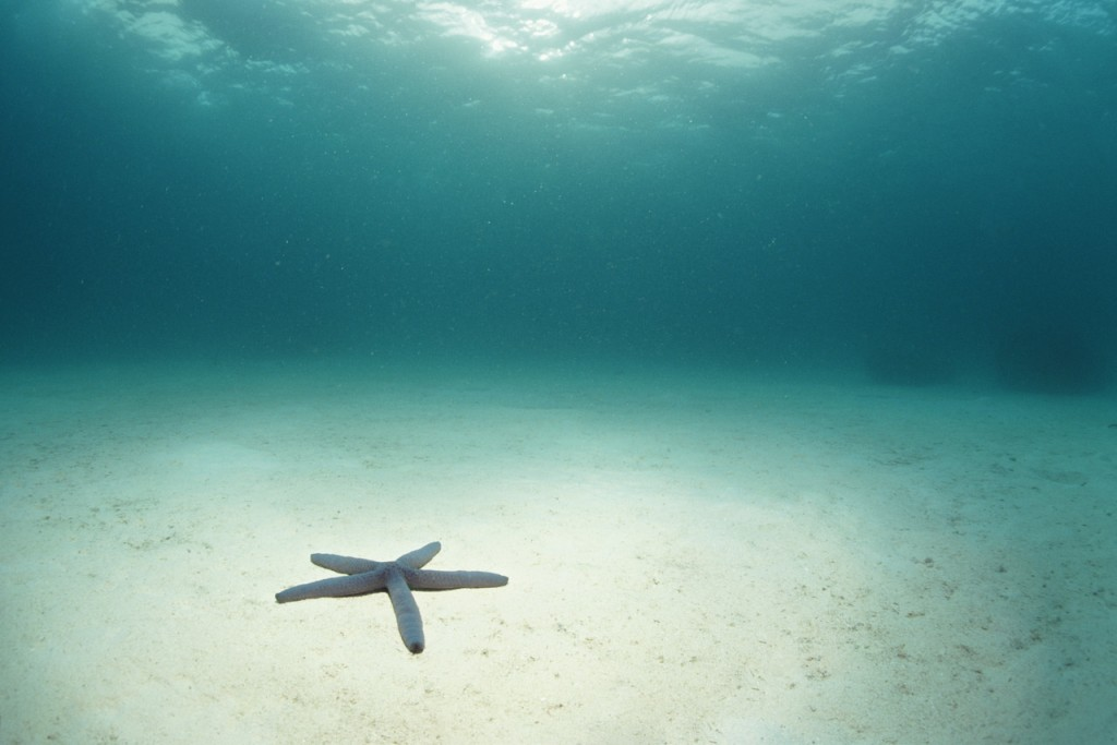Blue Sea Star in Open Ocean